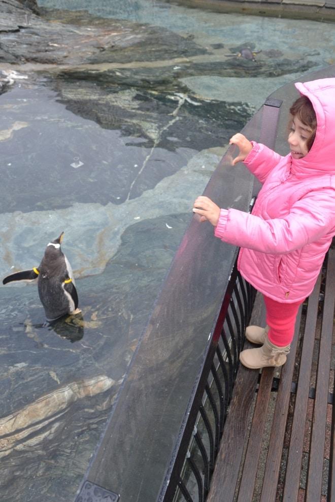 bergen-aquarium-1