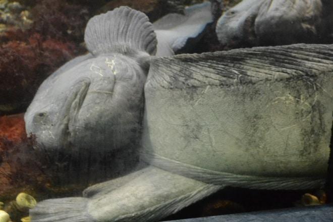 bergen-aquarium-3