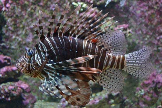 bergen-aquarium-4