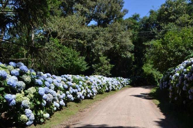 estrada-quilombo-chapadao-1