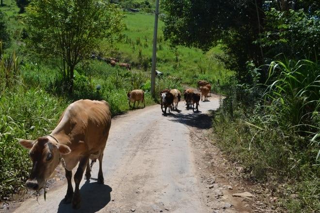 gramado-rs115-bloqueada-estrada-do-quilombo-5