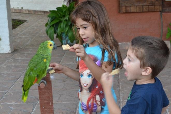 el-rebenque-papagaio-1