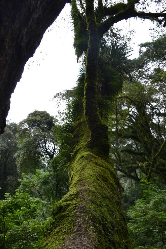 ruta-9-salta-purmamarca-41